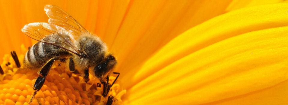 Bienenblog.eu
