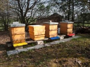 Beuten und Flachzargen als Honigräume vor dem Aufsetzen