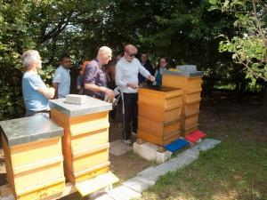 Völkerkontrolle durch die Neu-Imkergruppe und zugleich public bee-keeping: Öffnen eines Bienenstockes