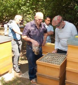 Völkerkontrolle durch die Neu-Imkergruppe: Öffnen eines Bienenstockes. Abheben des Absperrgitters