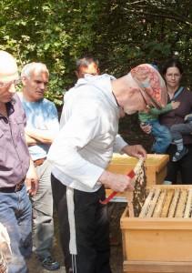 Völkerkontrolle durch die Neu-Imkergruppe und public bee-keeping: ein Rahmen bzw. eine Wabe wird gezogen