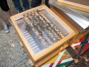 public bee-keeping: Einblick durch eine Absperrfolie in einen Ableger