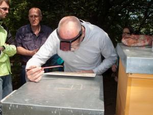 Völkerkontrolle durch die Neu-Imkergruppe: Zählen der Varroamilben auf der Windel