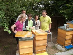 Völkerkontrolle durch die Neu-Imkergruppe: Öffnen eines Volkes am Honigraum