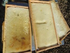Leere Bienenwaben aus einem toten Volk