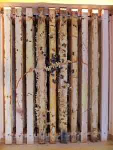 Wabengassen mit toten Bienen