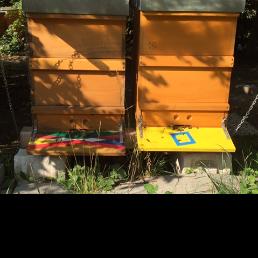 02.09.2015 - Bienenvölker auf der Streuobstwiese
