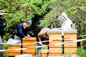 Die Neuimkergruppe mit Matthias Adler (gebückt) während Arbeiten an den Bienenvölkern