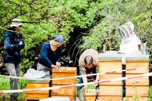 Die Neuimkergruppe mit Matthias Adler (in der Mitte, gebückt) beim Arbeiten an den Bienenvölkern