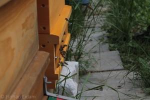 Anfliegende Bienen