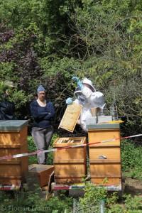 Neuimkergruppe: wir üben das Abschlagen der Bienen vom Rahmen