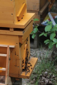Ablegerkasten mit Bienen davor