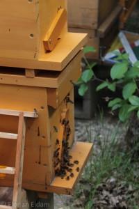 Ablegerkasten mit Bienen im Anflugbereich. Links erkennbar ein Königinnenzuchtrahmen