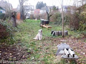 FIV-Grundstück im Niddapark. Blick vom Eingang. Der Hund (Silla) gehört nicht dazu.