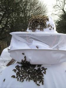 Bienentrauben auf der Schutzkleidung bei der Winterbehandlung 2015