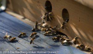 Einfliegende Bienen