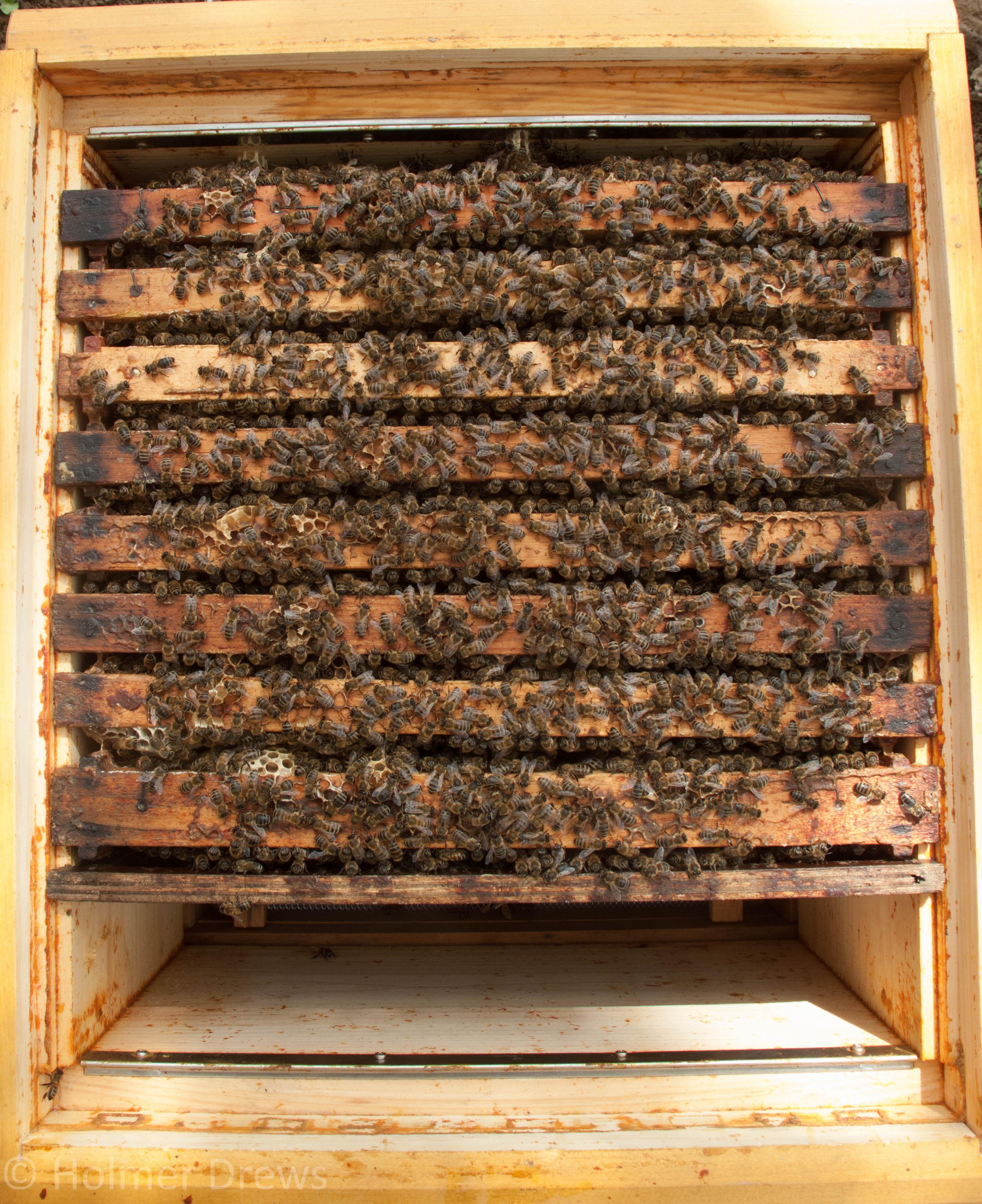 Zander – Bienenblog.eu