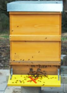 Bienen auf der neuen Beute
