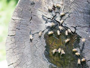 Bienentränke-4-