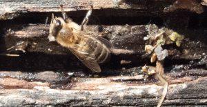 Bienentränke-2-