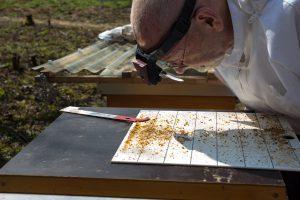 Untersuchung des Gemülls auf Varroamilben
