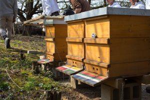 Bienenbeuten. An der rechten Beute ist an der Vorderseite das Loch zu erkennen, das ein Specht im Winter produziert hat