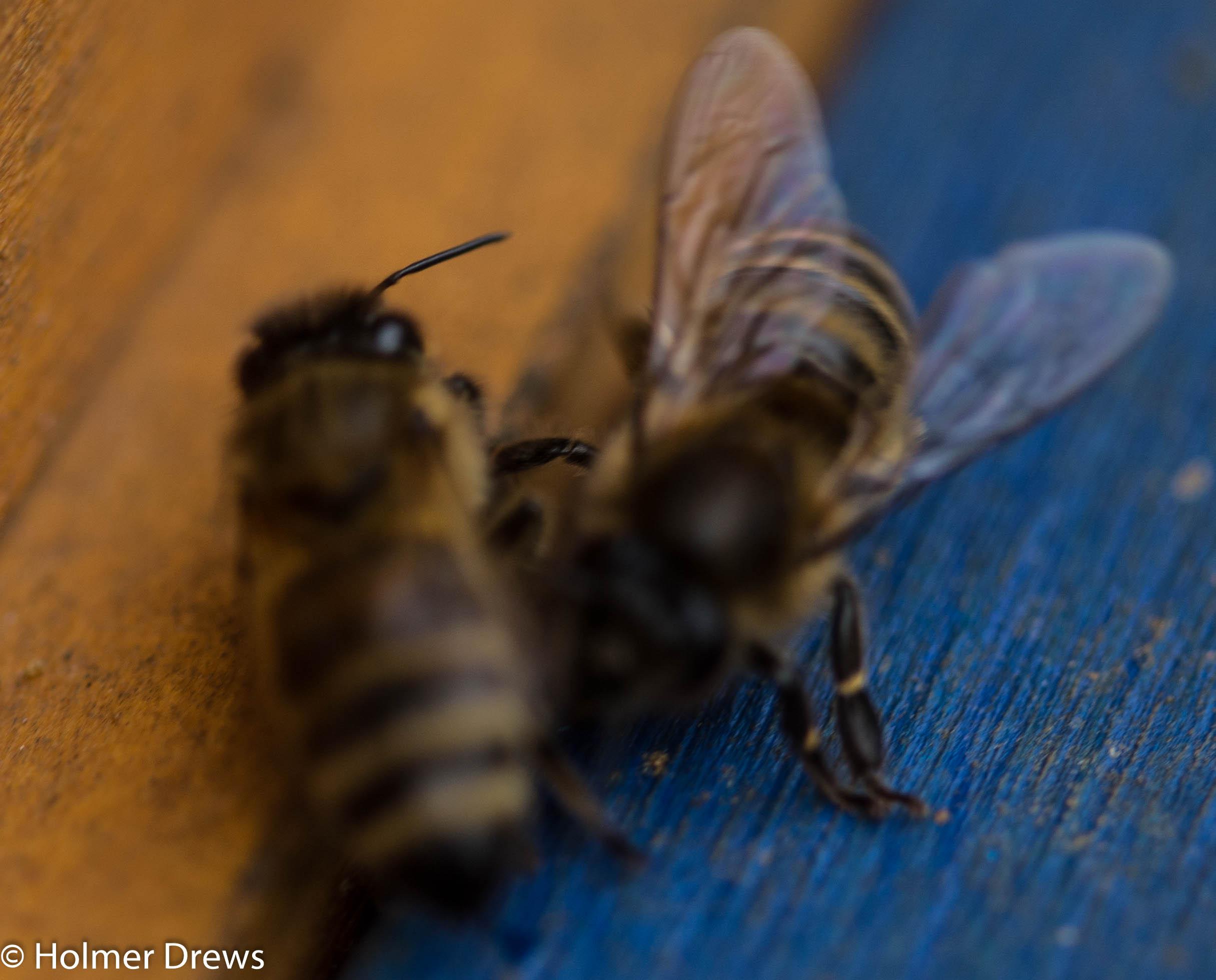 honigentnahme bei bienen
