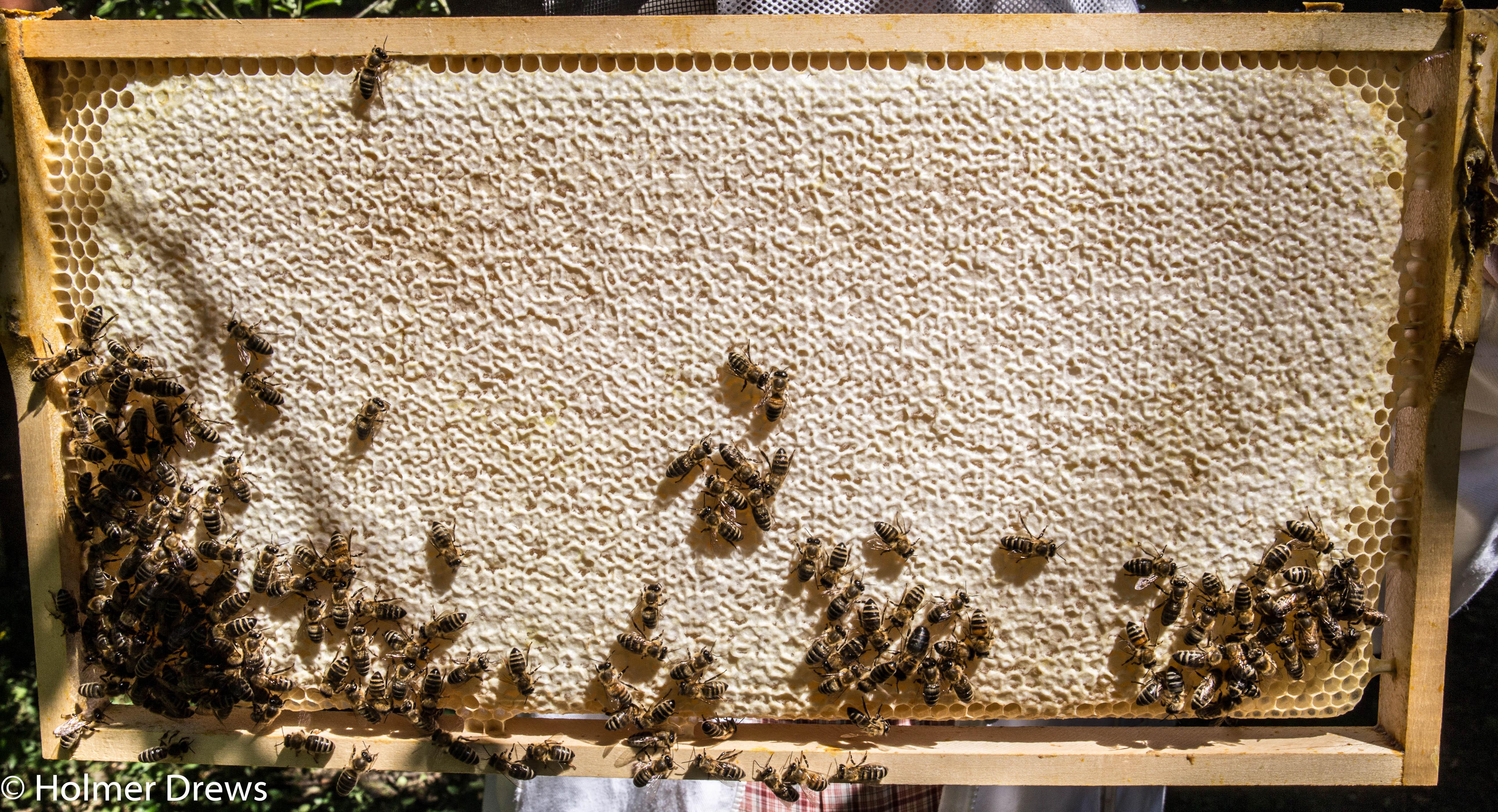6) Bienenkrankheiten – Bienenblog.eu