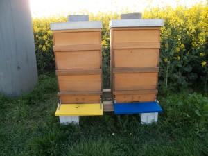 Ostern 2014: die gleichen Beuten am Abend. Die Bienen haben sich wieder nach innen verzogen.