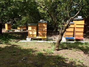 Unsere Bienenvölker am 1.6.2014
