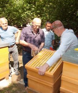 Völkerkontrolle durch die Neu-Imkergruppe: Öffnen eines Volkes durch Abheben des Honigraumes