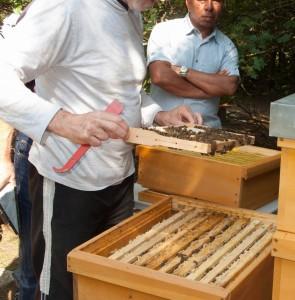 Völkerkontrolle durch die Neu-Imkergruppe und public bee-keeping: Demonstration einer Wabe oder eines Rahmens