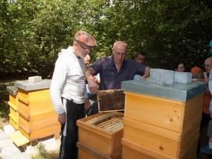Völkerkontrolle durch die Neu-Imkergruppe: Ziehen von Waben aus dem Bienenvolk oder der Beute