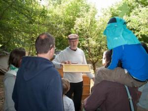 public bee-keeping: einer Besuchergruppe wird eine Mittelwand gezeigt