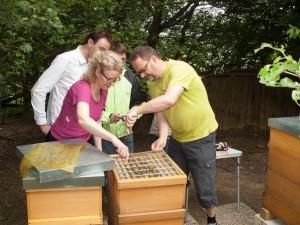 Völkerkontrolle durch die Neu-Imkergruppe: Abnahme des Absperrgitters zum Honigraum