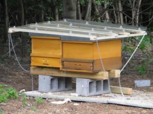 Dachkonstruktion über zwei einräumigen Beuten, in denen je ein frisch gefangener Bienenschwarm untergebracht ist