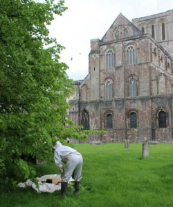 Swarm-Collectors in Winchester beim Sammeln eines Bienenschwarms