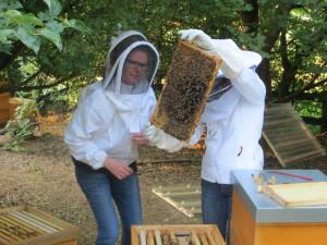 Suche nach der alten Königin im Bienenvolk