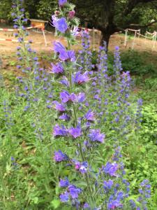 Bienenweide von 2014