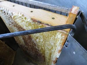 Blick in die Honigschleuder