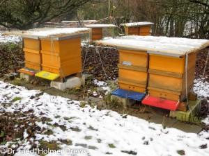 Unsere Bienenstöcke im Novemberschnee 2015. Alle drei Reihen sind zu erkennen.