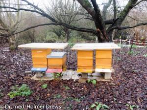 4. Reihe unserer Bienenstöcke im November 2015, hier allerdings ohne Schneeauflage