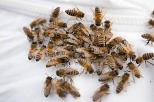 Ansitzende Winterbienen auf Matthias Rücken