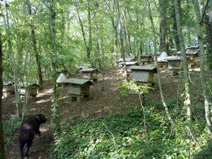 Bienen in Burgund