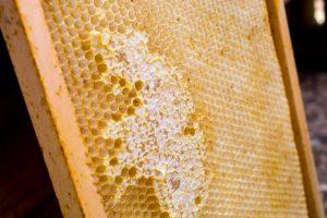 Ausgebaute Wabe mit verdeckelten Zellen (=Honig)