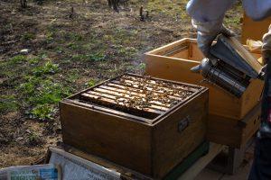 Beute in DNM. Zur Beruhigung werden die Bienen eingeräuchert. Früher geschah dies durch die Imkerpfeife, heute mit dem Smoker