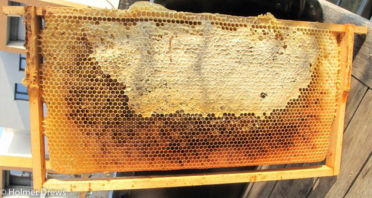 Wie sich Bienenwachs verändert